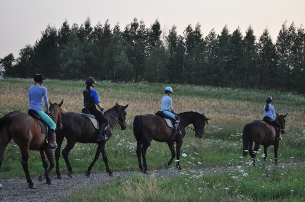 Dyscypliny jeździeckie