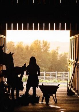Jak nauczyć się jazdy konnej?