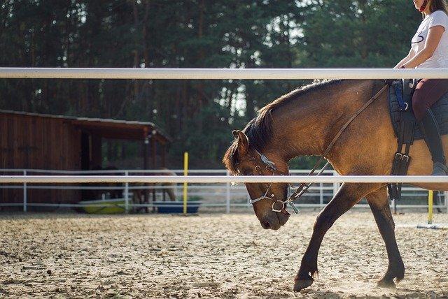 Korzyści z jazdy konnej