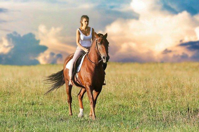 Pensjonat dla koni, co powinno znaleźć się w ofercie?