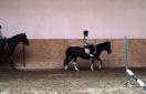 Wakacje z nauką jazdy konnej